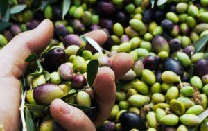 Jak rozpoznać dobrą oliwę z oliwek?
