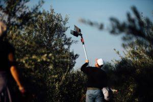 Ręczny zbiór oliwek